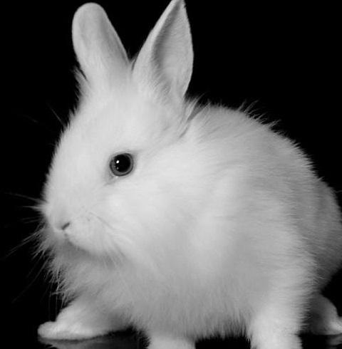 magic white rabbit probably